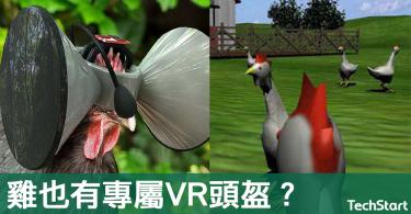 【異想天開】雞也有專屬VR頭盔?美科學家:虛擬實境為雞隻減壓