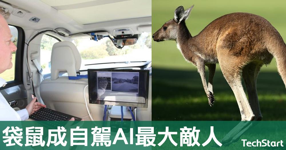 【好袋鼠唔攔路】富豪汽車訪問中大談研發難處,稱其自駕汽車AI未能辨認袋鼠