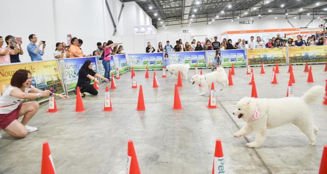 Pet Expo 2019