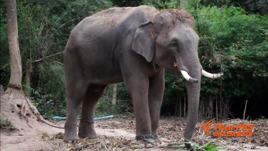 Elephants in ancient China  Wikipedia