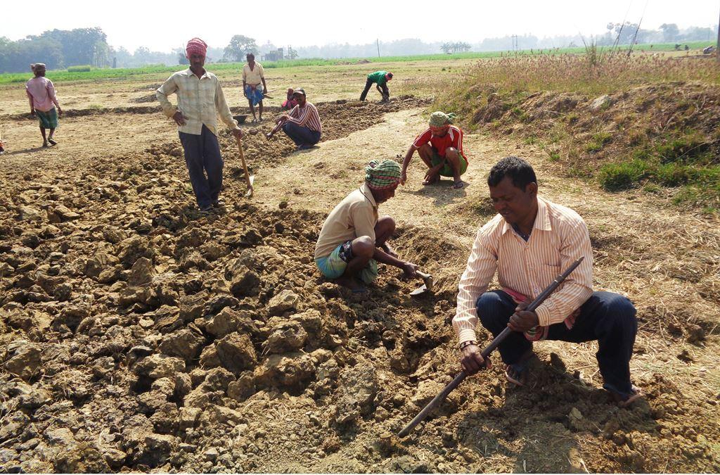 منریگا کے تحت نینو پلانٹ کے ذریعے قبضہ کی گئی زمین سے اینٹ پتھر نکالتے یومیہ مزدور۔