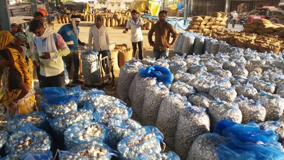 چھیپابڑود کی لہسن منڈی کا سرکاری خرید مرکز (فوٹو : اودھیش آکودیا)