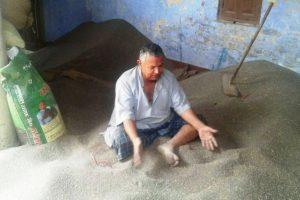 مہیندرپور کے کسان شیو کمار سنگھ نے اس بار 200 بورا مسور پیدا کیا ہے، لیکن کوئی کاروباری اس کو خریدنے کو تیار نہیں ہے۔ (فوٹو : امیش کمار رائے / دی وائر)