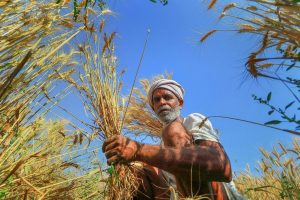 Farmers-India-PTI