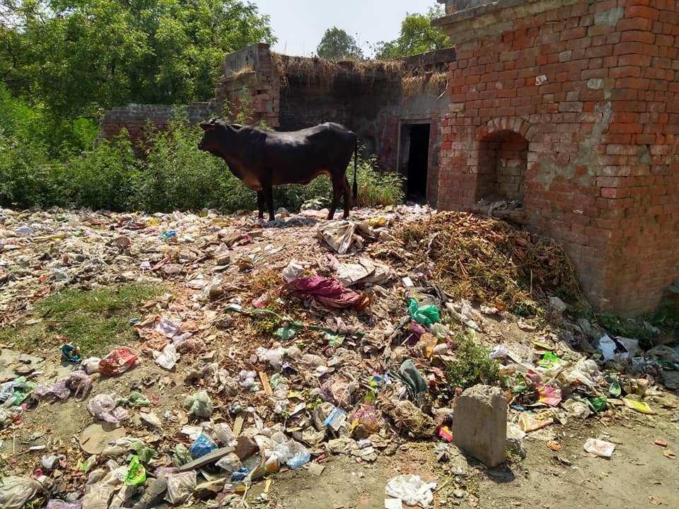 چوہان پٹی سبھا پور گاؤں میں کوڑے کا ڈھیر۔ (فوٹو : ریتو تومر)