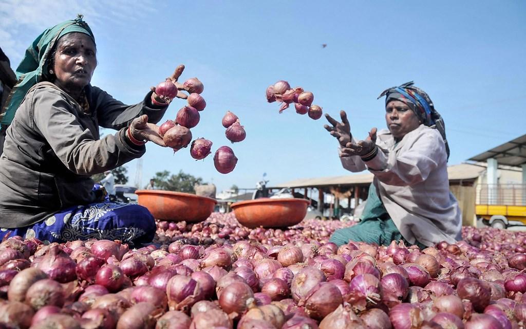 کرناٹک کے چکمنگلور میں سنیچر کو منڈی میں پیاز چھانٹتی خواتین(فوٹو : پی ٹی آئی)