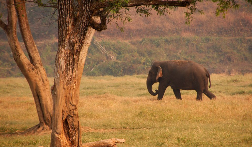Elephants are the 'gardeners of the forest'. Photo: christianhaugen/Flickr, CC BY 2.0