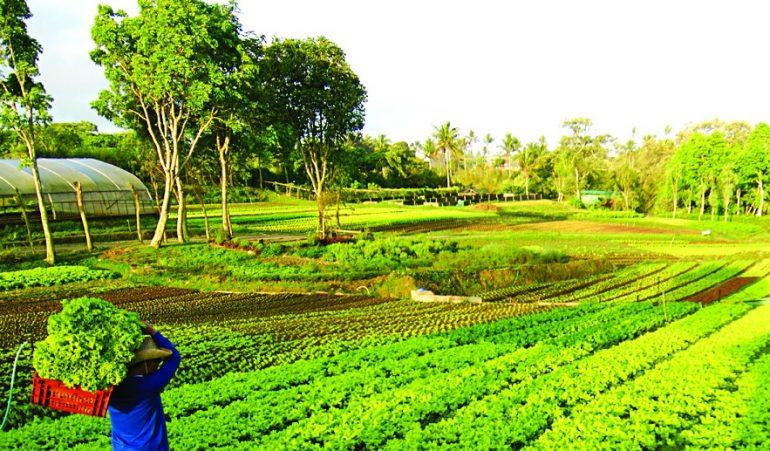 7 farm experiences near manila for your next weekend escape