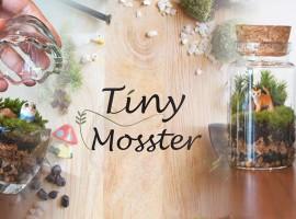Tiny Mosster ธรรมชาติย่อส่วน มาอยู่ในสวนในขวดแก้วสุดคูล (ร้านค้าแนะนำ #36)