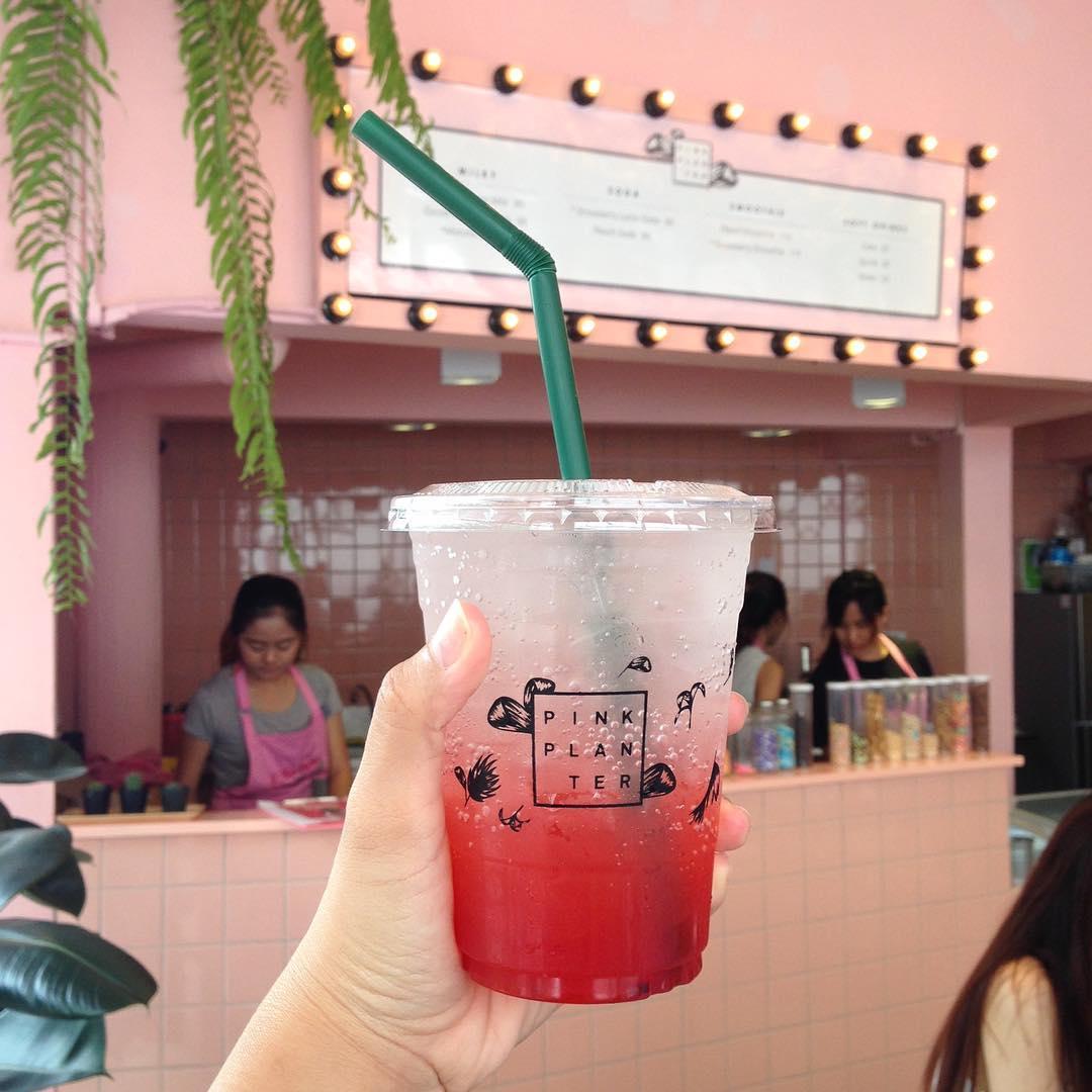 pinkplanter_chollathip