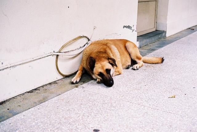 flickr.com/xhideo