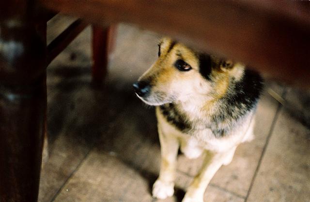 flickr.com/hmoong