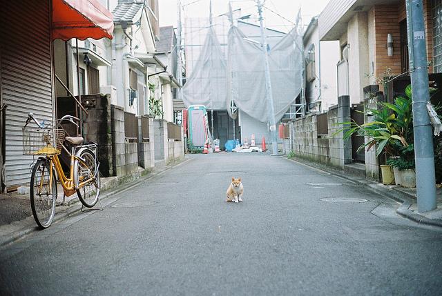 flickr.com/yamauchibukuro