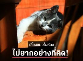 อยากเลี้ยงแมวในห้อง ไม่ยากอย่างที่คิด! มาดูวิธีการ เลี้ยงแมว ง่ายๆ