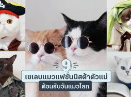 9 เซเลบแมวแฟชั่นนิสต้าตัวแม่ต้อนรับวันแมวโลก