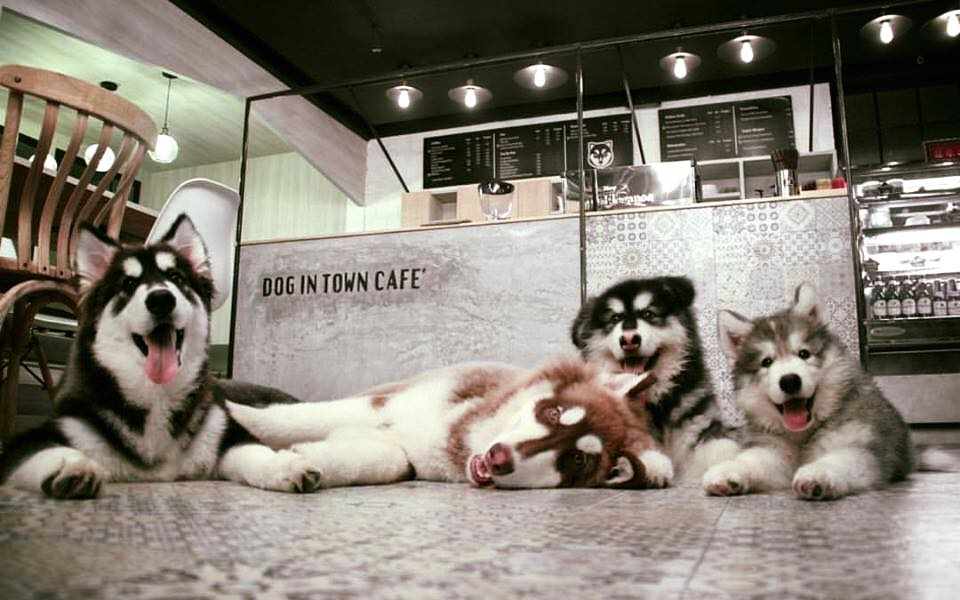 dog-in-town-7