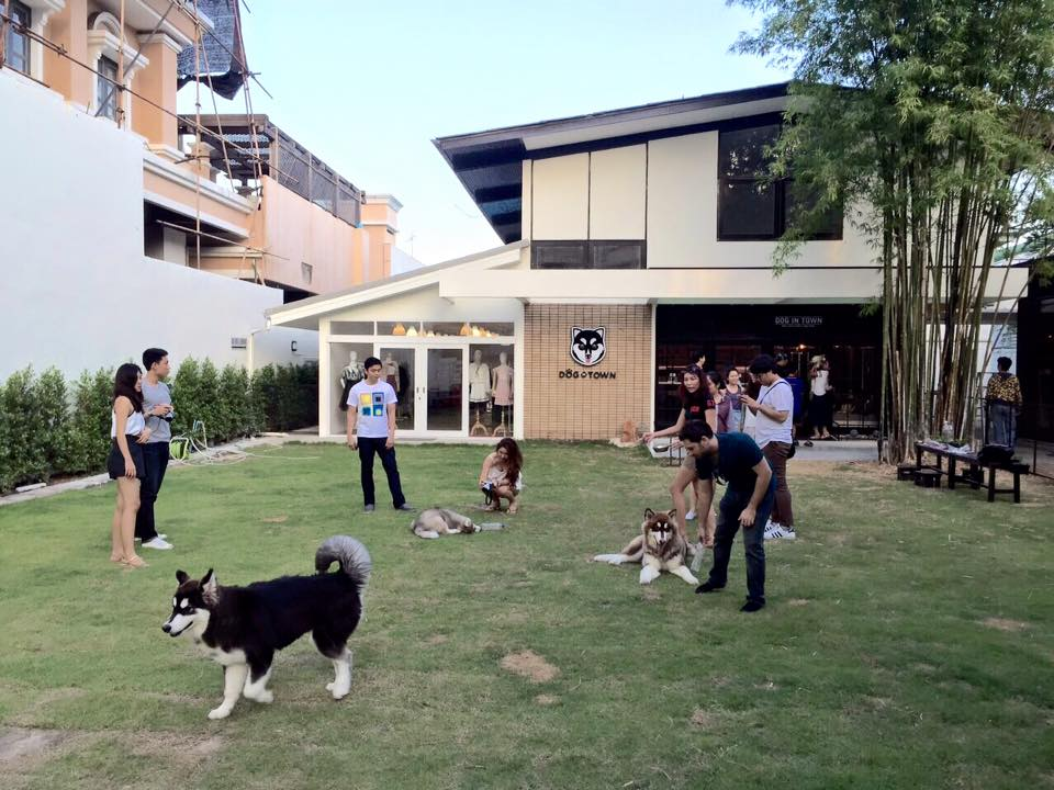 dog-in-town-6