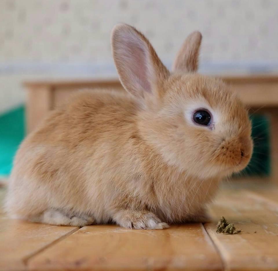 rabbito-5