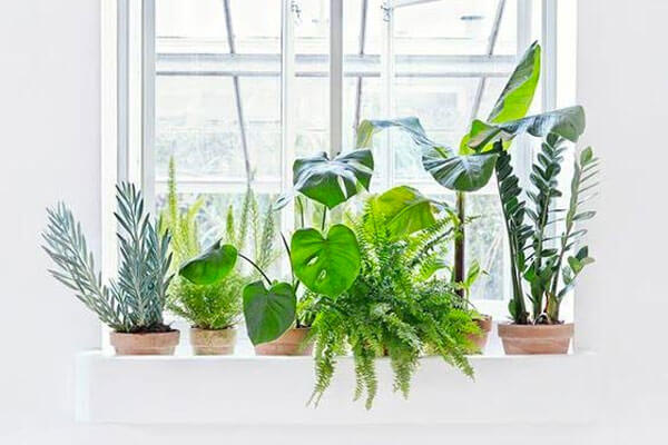 greenery house plants and pots