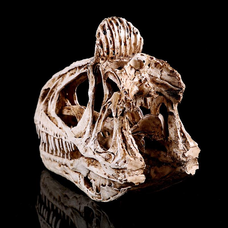 lifelike resin dinosaur skeleton cryolophosaurus skull