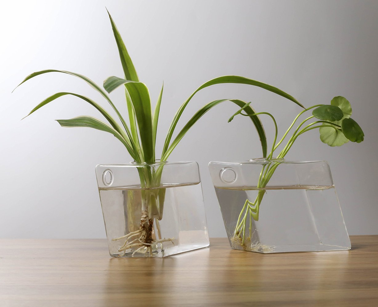 Mkono 2 Pcs Wall Hanging Plant Terrarium Glass Planter