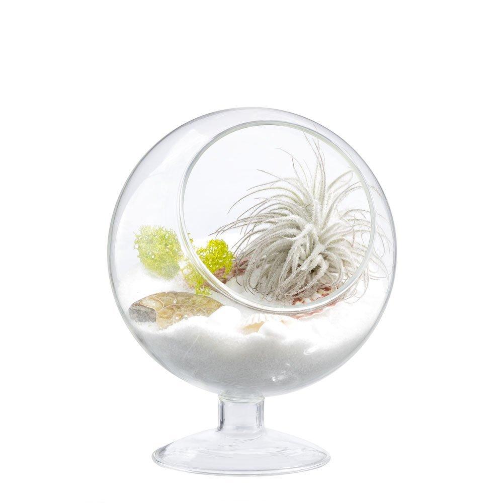 Air plant terrarium succulent glass planter holder for Air vase