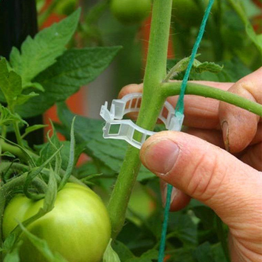 50PCS//Set Plant Support Garden Clips for Vine Vegetables Tomato to Grow Upright
