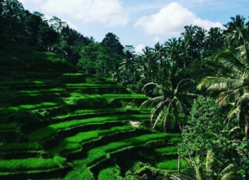 Ubud and Kintamani Bali Tour