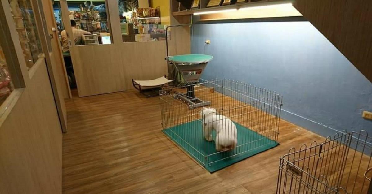 寵物美容教學推薦、台南寵物美容教學、台南寵物美容、台南動物醫院、台南寵物住宿、台南寵物百貨、永康區寵物美容教學、永康區寵物美容、永康區動物醫院、永康區寵物住宿、永康區寵物百貨、寵物美容設備、狗狗寵物美容教學、貓貓寵物美容教學、寵物美容教室