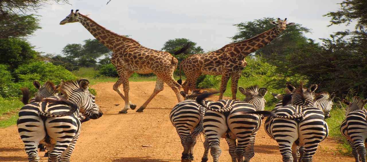 Unexplored East Africa