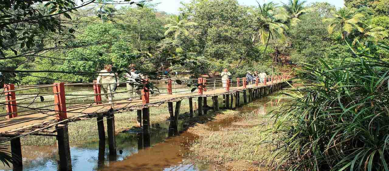 Day Trip To Dudhsagar Waterfall Goa