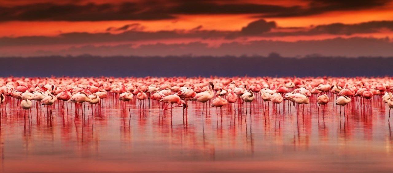 Secrets of Kenyan Safari