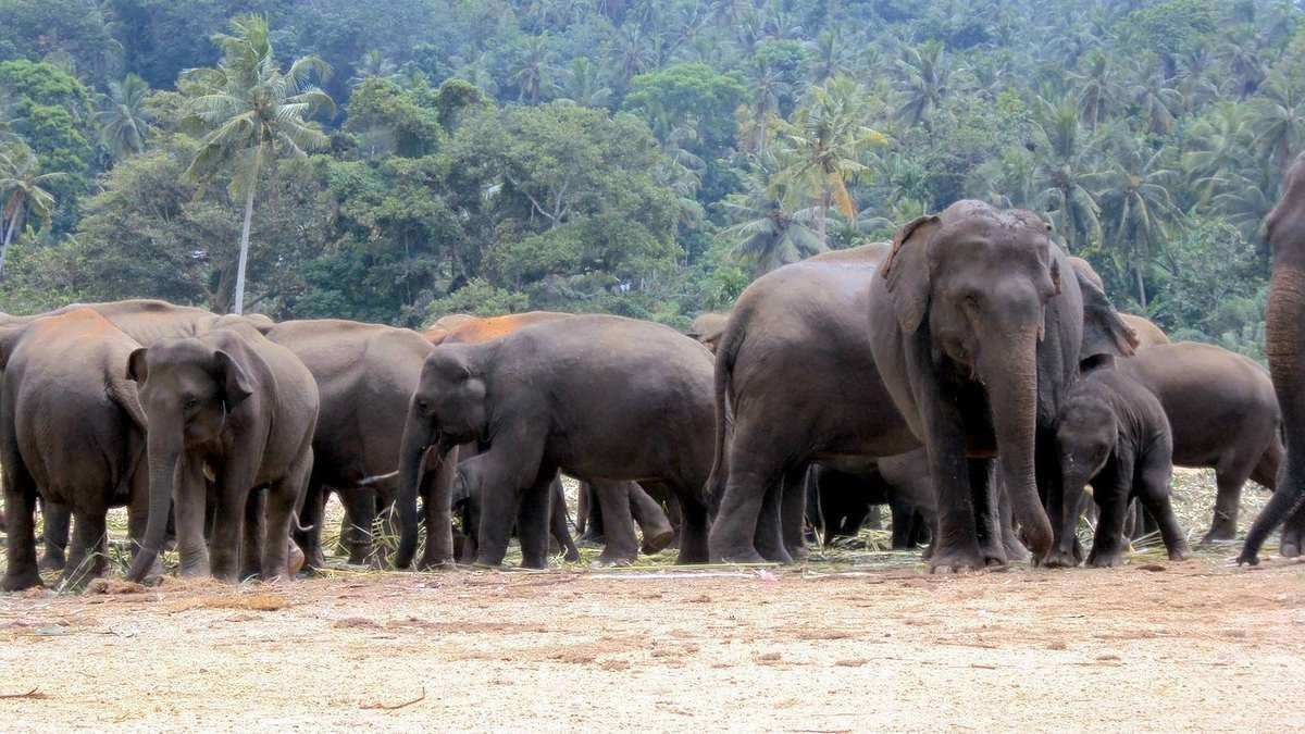 Jewel of Sri Lanka