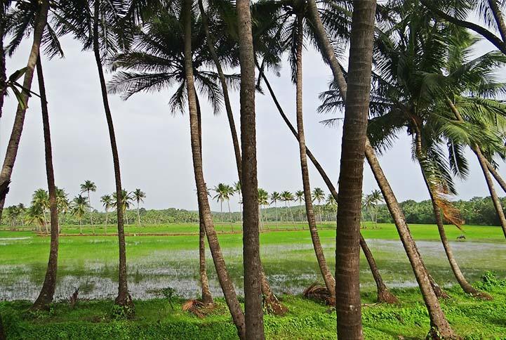 Holidays In Goa With Stay The Verda Carmona