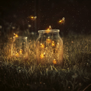 Festival of Fireflies
