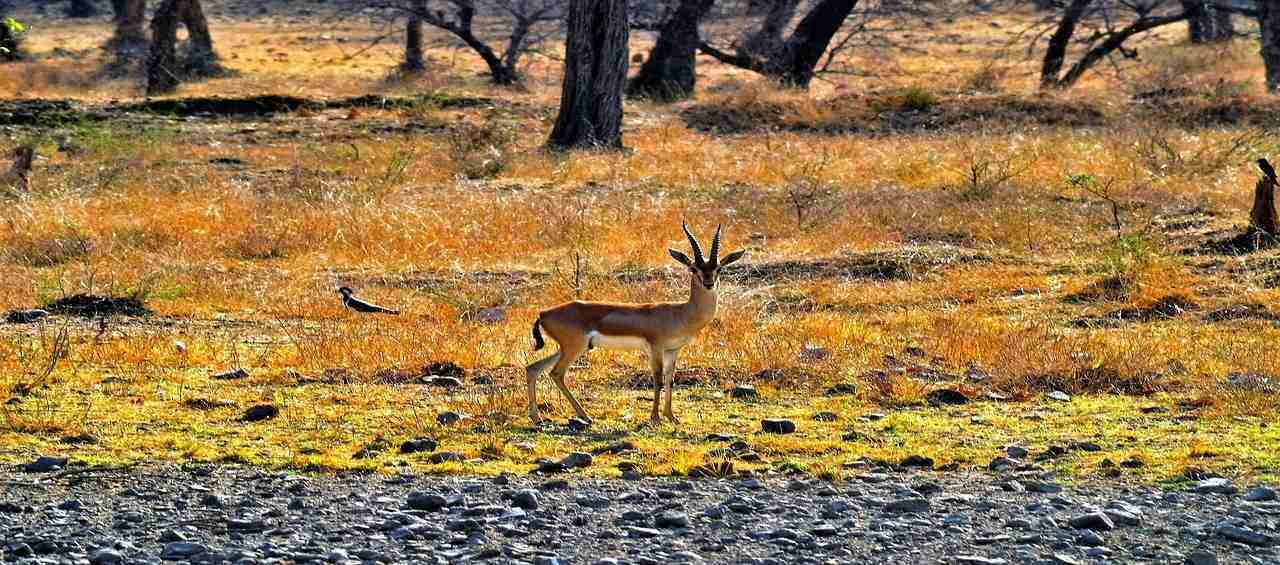 Wilderness of Rajasthan