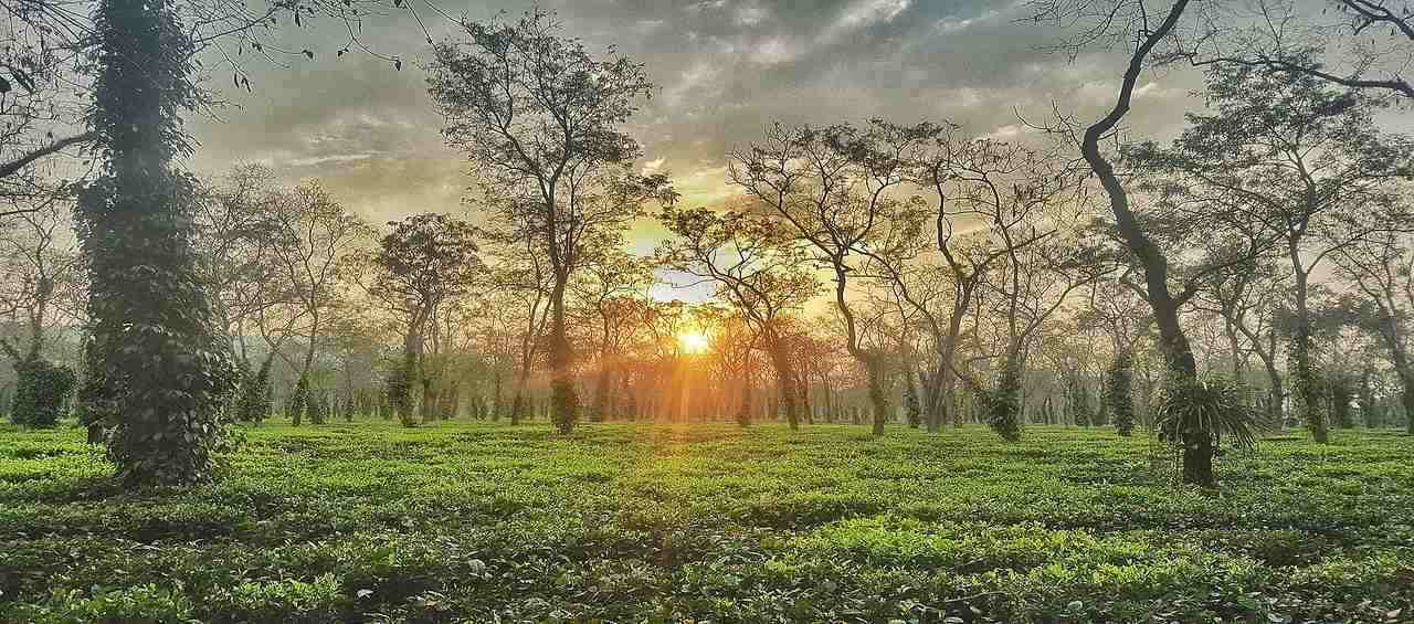 Wonders of Assam