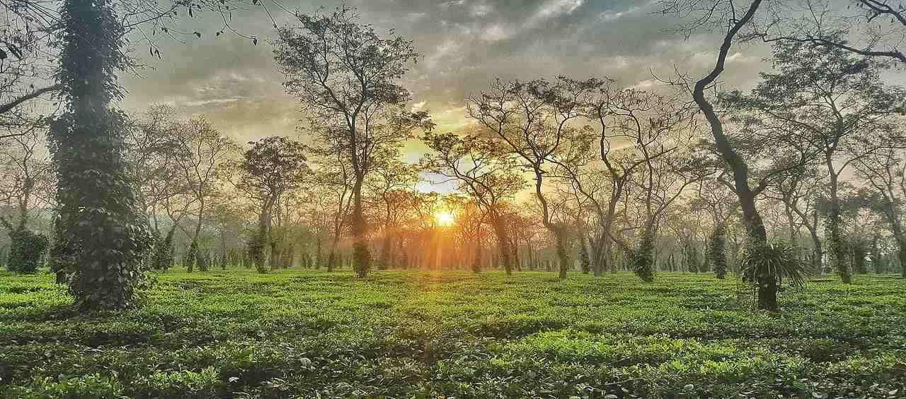 Astonishing Assam Meghalaya