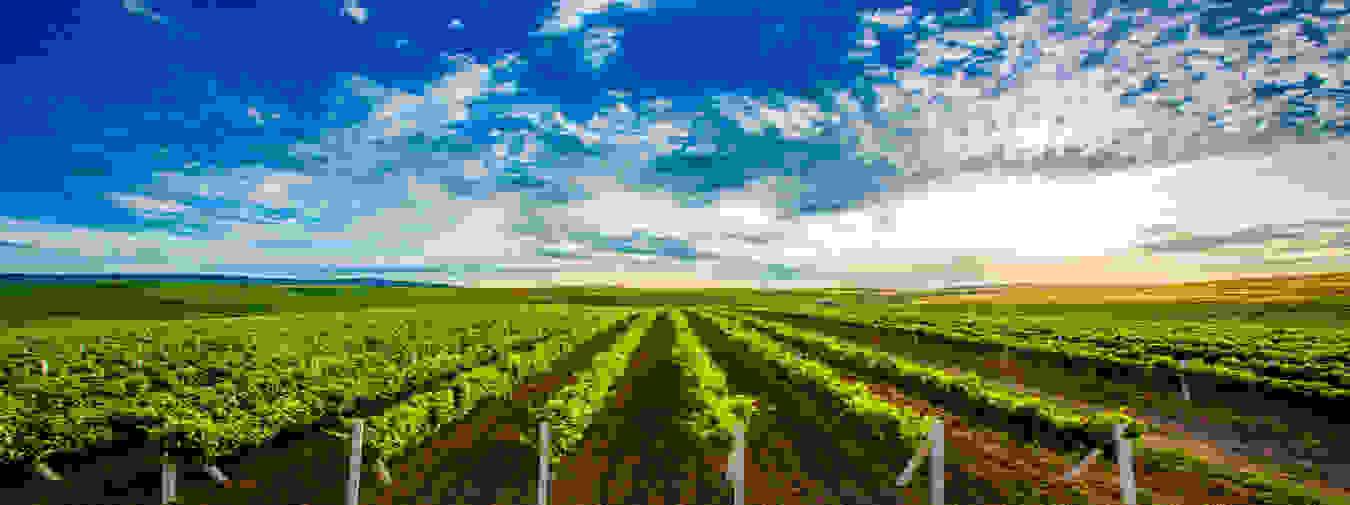 Azerbaijan Wine Special