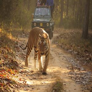 package itinerary1576325123611Royal Bengal Tiger Kanha