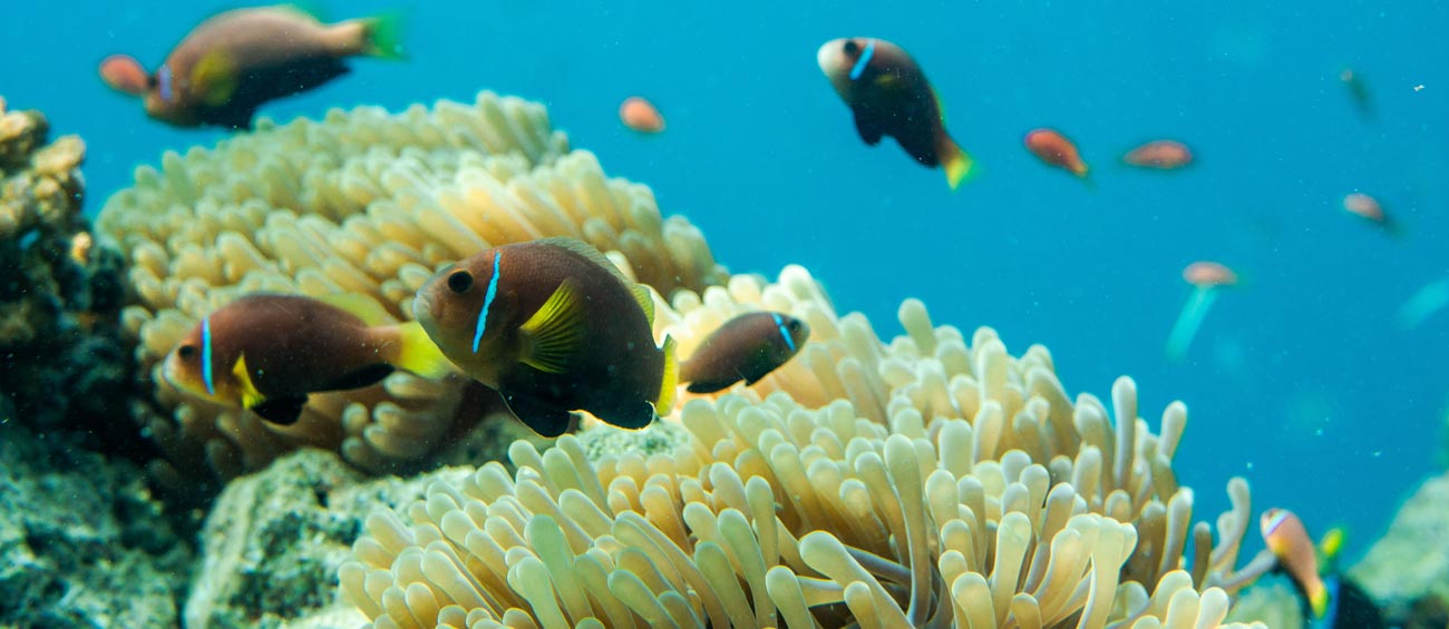 Be mesmerised by the Great Barrier Reef