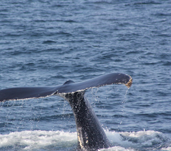 Eat a Whale