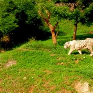 Visit Indira Gandhi Zoological Park