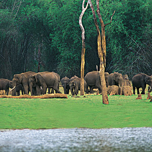 Thekkady, wildlife escapades in abundance