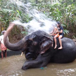 Elephant Shower and Bath in Thekkady