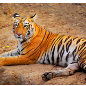 Go for an Adventurous Wildlife Safari