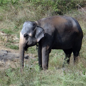 Spot wildlife at Mudumalai National Park