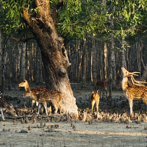 Wildlife Trek in Sundarbans