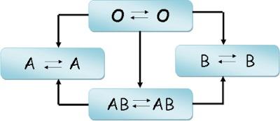 Sistem ABO : Pengertian – Fungsi – Cara Cek – Skema Tranfusi Darah