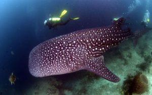 Diving Pulau Sipadan